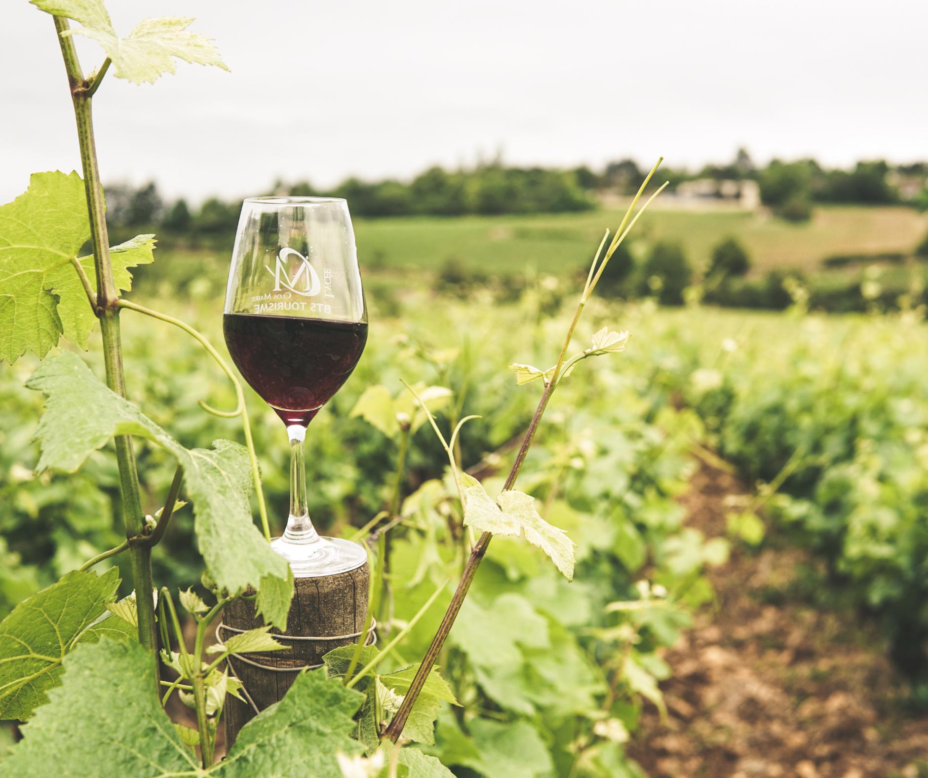 Glass of wine overlooking a vineyard